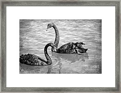 Black Swans - Black And White Textures Framed Print