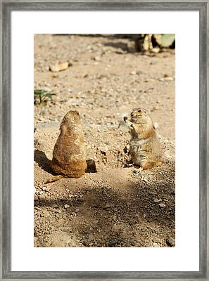 Black Tailed Prairie Dogs Framed Print by Daniel Hebard