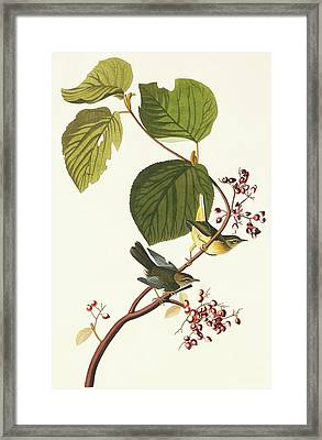 Black-throated Blue Warbler Framed Print by Natural History Museum, London/science Photo Library