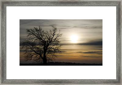 Black Tree At Sunrise Framed Print by Dan  Meylor