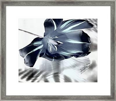 Black Tulip Framed Print