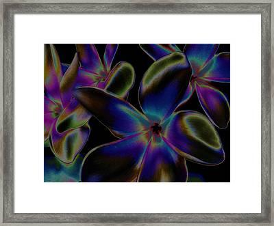 Black Velvet Frangi Framed Print by Rebecca Flaig