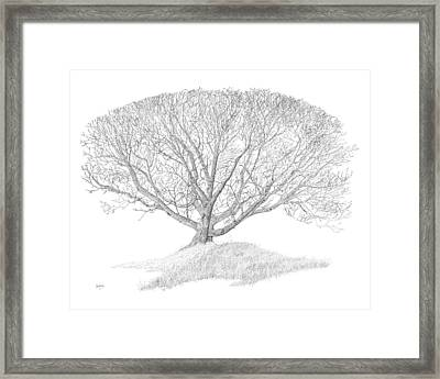 Black Walnut Framed Print