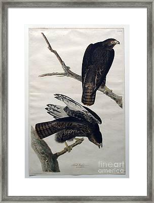Black Warrior  Framed Print by Celestial Images
