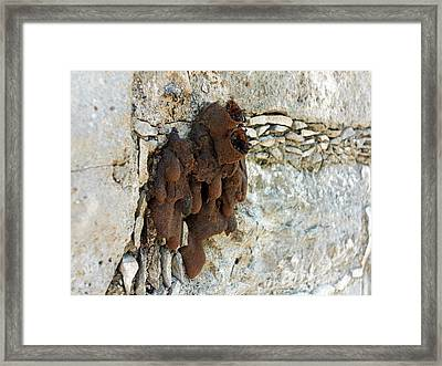 Black Wasp Nest Framed Print by Daniel Sambraus