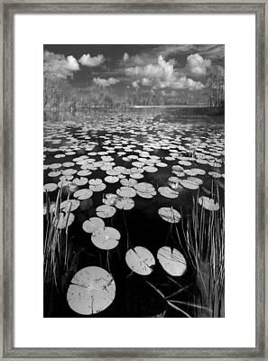 Black Water Framed Print by Debra and Dave Vanderlaan