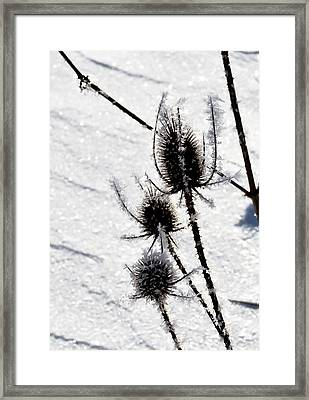 Black  White  Framed Print by Paulina Szajek