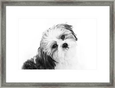 Black  White Puppy Framed Print by Paulina Szajek