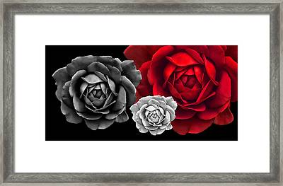 Black White Red Roses Abstract Framed Print by Jennie Marie Schell