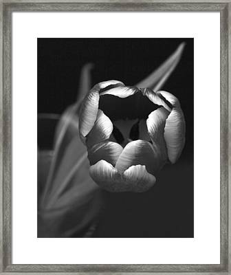 Black White Tulip Framed Print