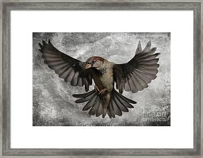 Black Wings Framed Print by Jim Wright