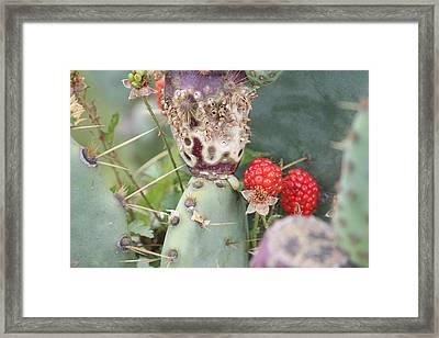Blackberries Are Coming Framed Print by Lorri Crossno