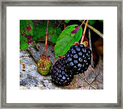 Blackberries Framed Print by Debbie Sikes