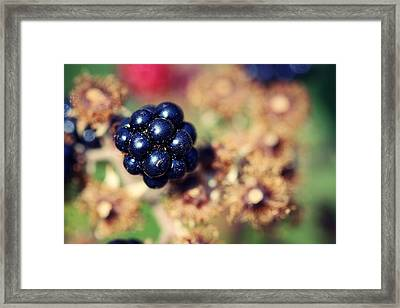 Blackberry Bliss Framed Print by Melanie Lankford Photography