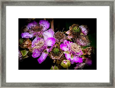 Framed Print featuring the photograph Blackberry Flower by Edgar Laureano