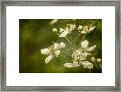 Blackberry Flowers With Textures Framed Print