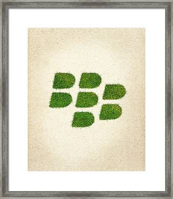 Blackberry Grass Logo Framed Print by Aged Pixel