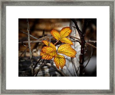 Blackberry Late Autumn Colors Framed Print