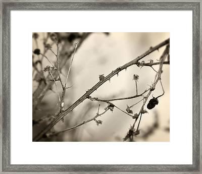 Blackberry Thorns 2 Framed Print