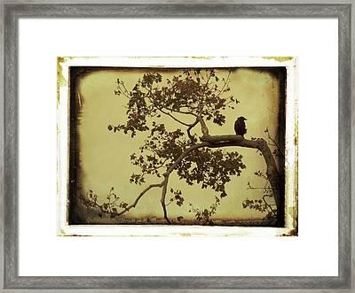 Vintage Blackbird In A Tree Framed Print