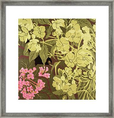 Blackbird In The Hellebores Framed Print