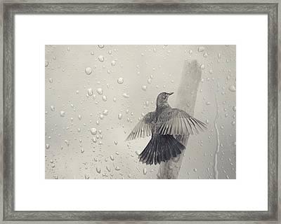 Blackbird In The Rain Framed Print by Heike Hultsch