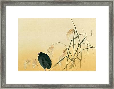 Blackbird Framed Print by Japanese School