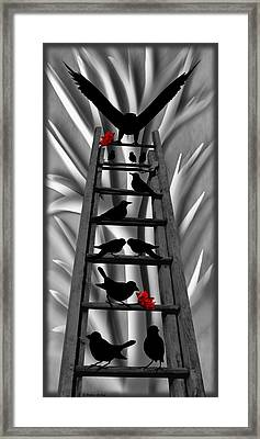 Blackbird Ladder Framed Print by Barbara St Jean