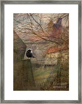 Blackbird Framed Print by Liz  Alderdice