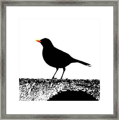 Blackbird On A Wall Framed Print