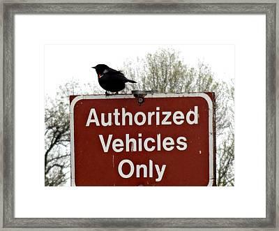 Blackbird On Patrol Framed Print by Lizbeth Bostrom