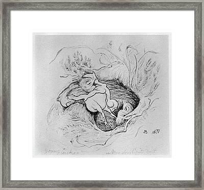 Blackburn Birds, 1871 Framed Print by Granger