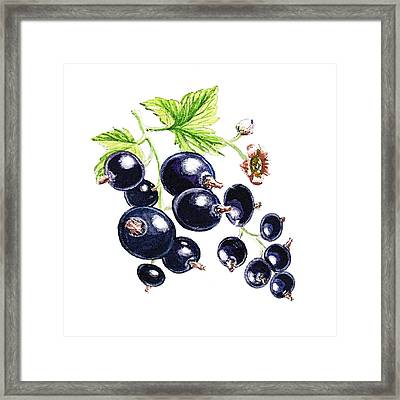 Framed Print featuring the painting Blackcurrant Berries  by Irina Sztukowski