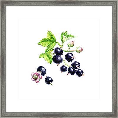 Framed Print featuring the painting Blackcurrant Botanical Study by Irina Sztukowski