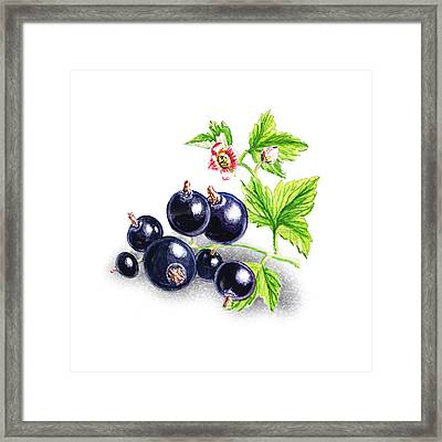 Blackcurrant With Leaves And Flowers Framed Print