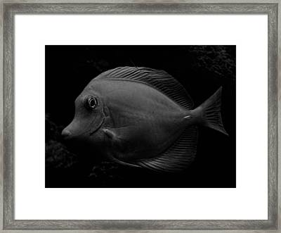 Blackened Fish Framed Print by Wendy J St Christopher