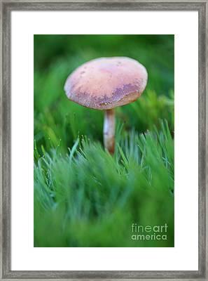 Blackening Wax Cap Mushroom Framed Print