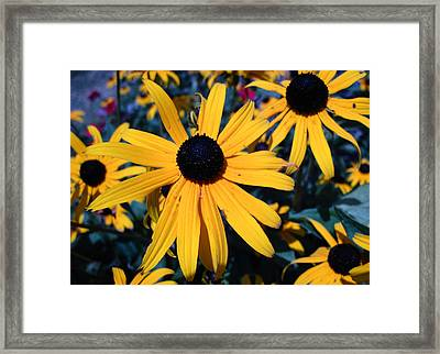 Framed Print featuring the photograph Blackeyed Susan Abstract by Mary Bedy