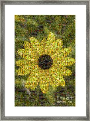 Blackeyed Suzy Mosaic Framed Print