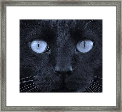 Blackie Blue Framed Print by Elizabeth Sullivan