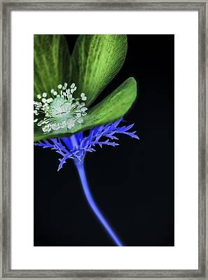 Blacklight Framed Print by Caitlyn  Grasso