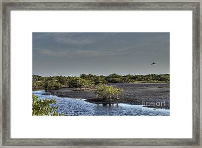 Blackpoint Wildlife Drive Framed Print by Anne Rodkin