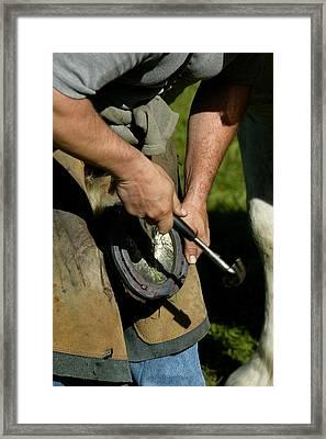 Blacksmith Shoeing A Percheron Horse Framed Print