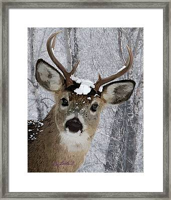 Blacktail Buck In Snow Framed Print