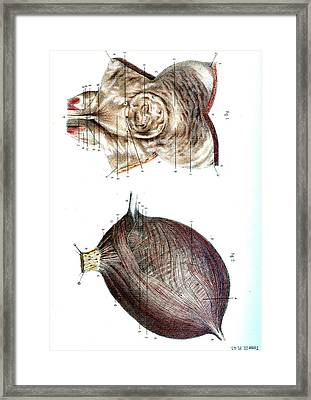 Bladder Anatomy Framed Print by Collection Abecasis