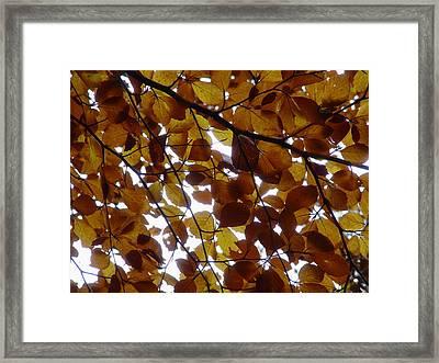 Bladerdek Framed Print