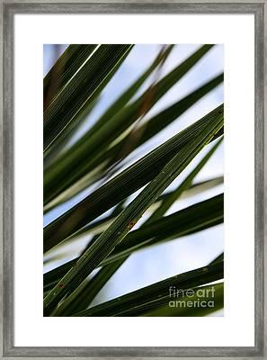 Blades Of Grass Framed Print by Neal Eslinger