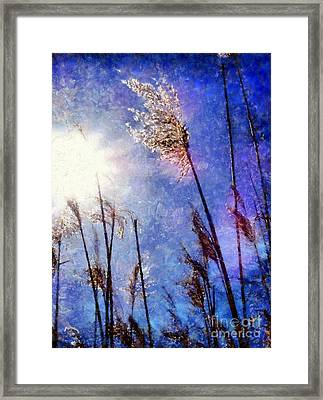 Blades Of Glory Marsh Grass Framed Print