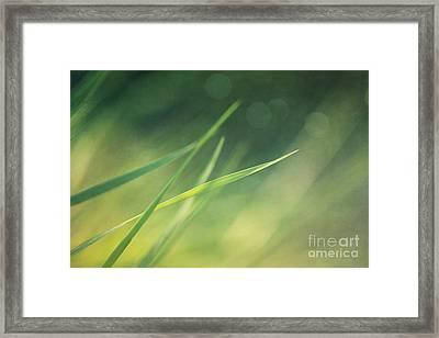Blades Of Grass Bathing In The Sun Framed Print by Priska Wettstein