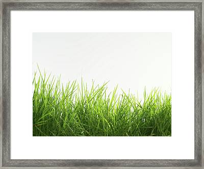 Blades Of Grass Framed Print by Tek Image
